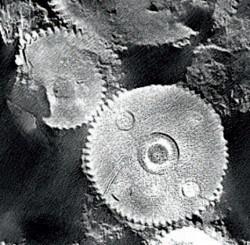 Die Röntgenaufnahme zeigt die Fertigkeit der antiken Erfinder ganz genau
