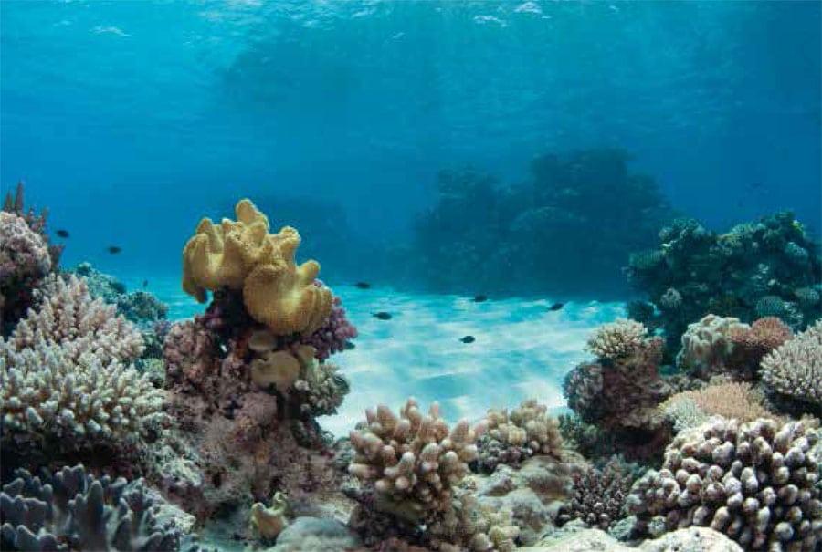 Jaeger-LeCoultre schützt gemeinsam mit der UNESCO maritime Naturschutzgebiete, unter anderem auch das Great Barrier Reef in Australien