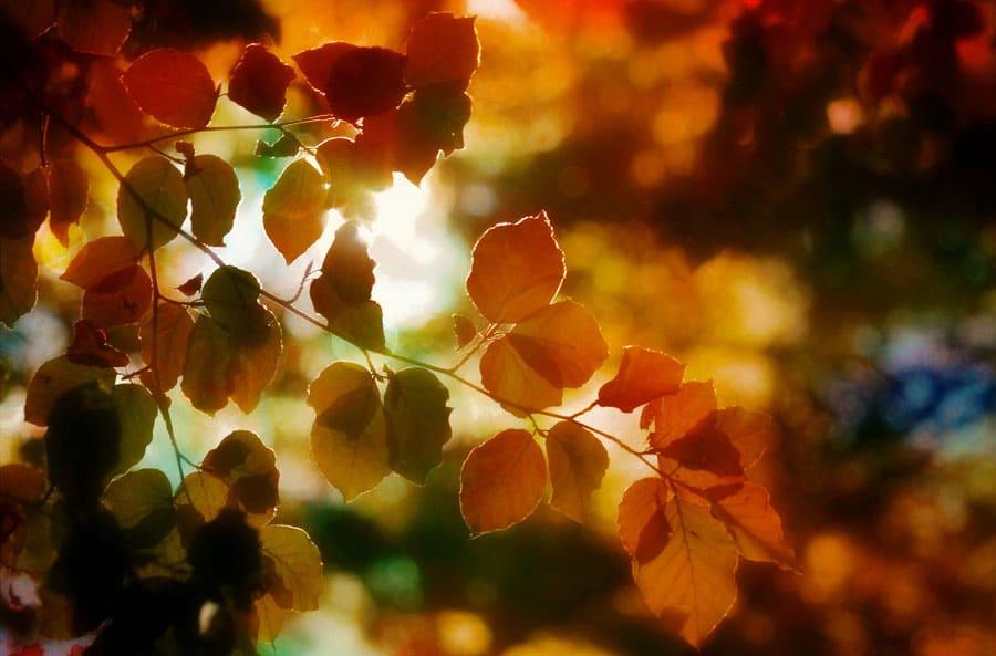 Herbst: bunte Blätter