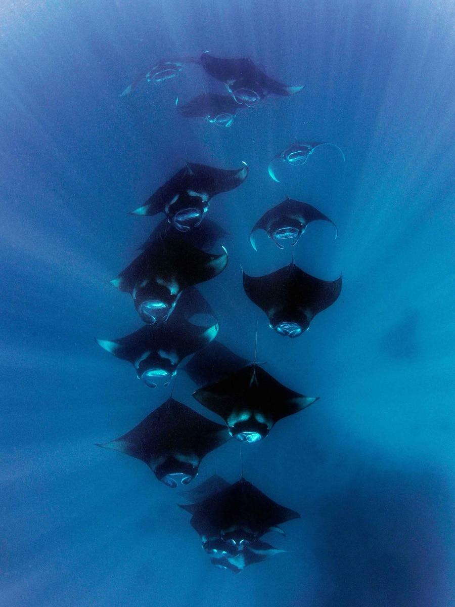 Taucheruhrenspecial 2021: Carl F. Bucherer Reef Manta Ray